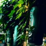 Carlsberg: безалкогольное пиво продолжает опережать рынок