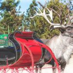 Breckenridge Brewery будет доставлять рождественский эль на оленях