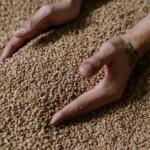 Цены на солод российского производства выросли в среднем на 15-25